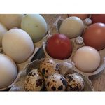 Fresh eggs at Penfro B&B